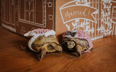 A Big Gay Tortoise Wedding